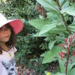 celeste y plantas